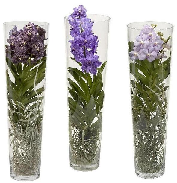 Орхидея ванда в вазе - история и уход