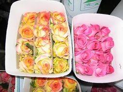 розы в бутонах в пачке