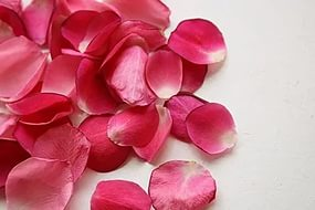 Способы хранения лепестков роз