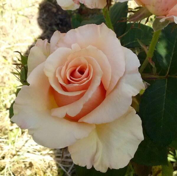 ob_6432f4_rosier-paul-ricard-pj-2