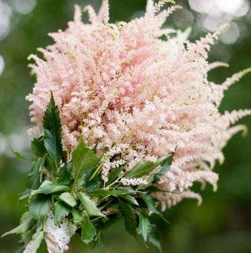 Монобукет из розовый астильбы