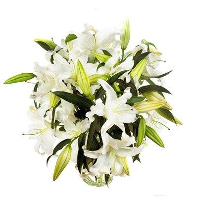 9 белых лилии