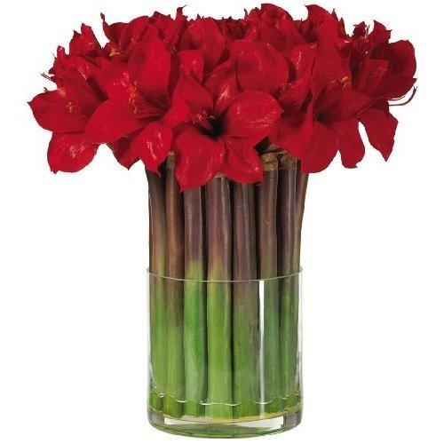 15 красных амариллисов