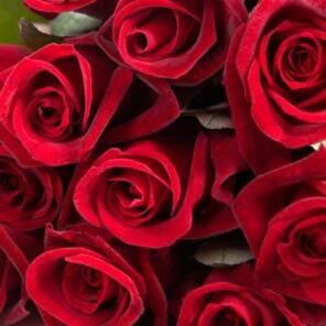 """Душистая роза """"Экстаз"""""""