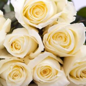 "Душистая роза ""Норма Джин (Norma Jeane)"""