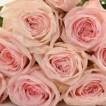 "Душистая роза ""Пинк О'Хара (Pink O'Hara)"""