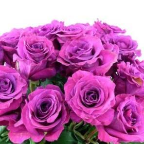 "Душистая роза ""Мамми Блю (Mammy Blue)"""