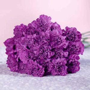 Моно-букет из фиолетовых гвоздик