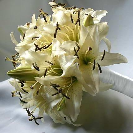 Лилия и орхидея
