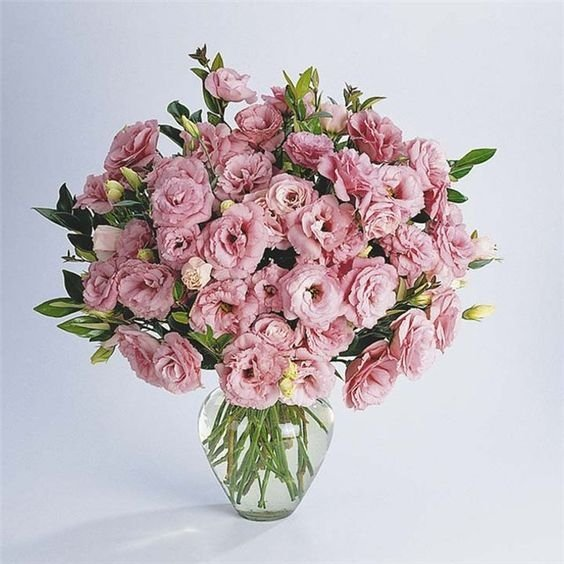 35 розовых эустом