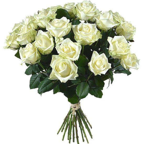 25 белых роз в монобукете