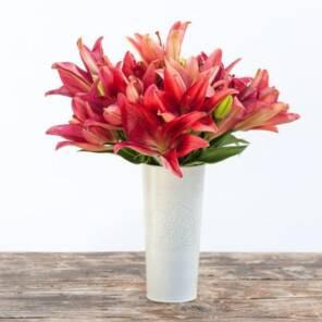 13 красных лилий