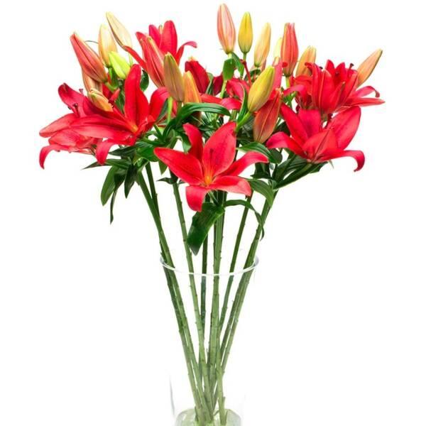 7 красных лилий азиаток