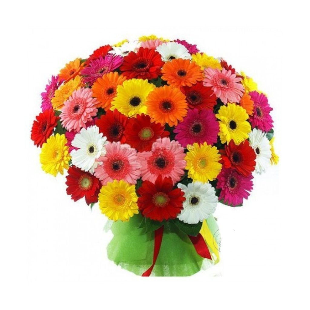 Где можно купить цветы герберы в чебоксарах