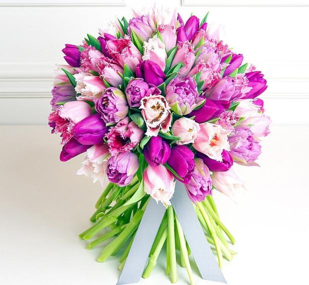 101 махровый тюльпан