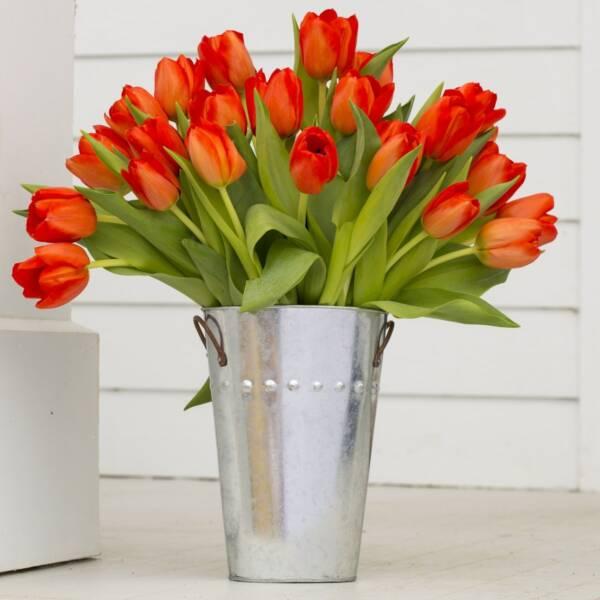 51 красно-оранжевый тюльпан