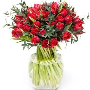 51 красный пионовидный тюльпан