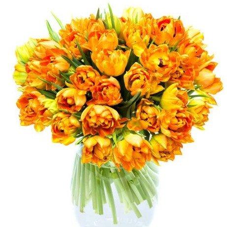35 оранжевых тюльпанов
