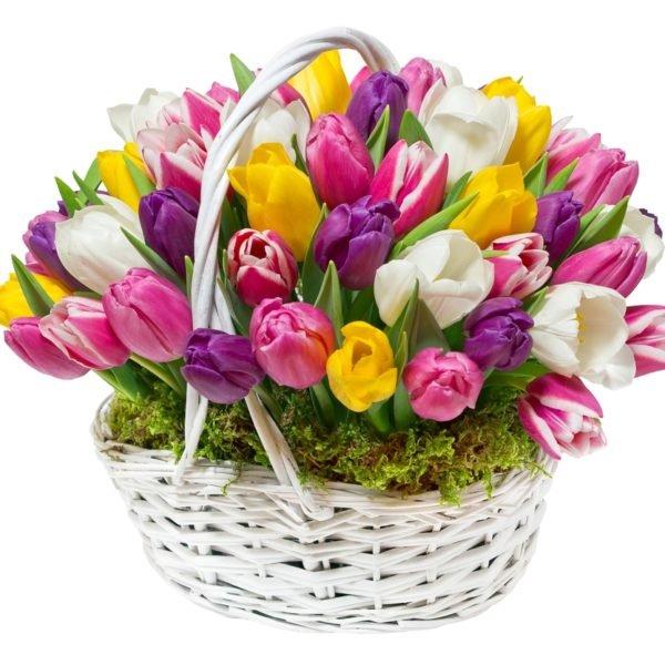 Корзина 51 тюльпан
