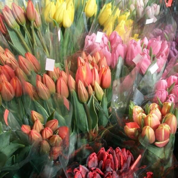 500 тюльпанов