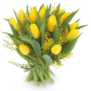 15 тюльпанов с мимозой