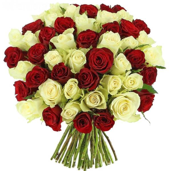 51 красно-белая роза 70см