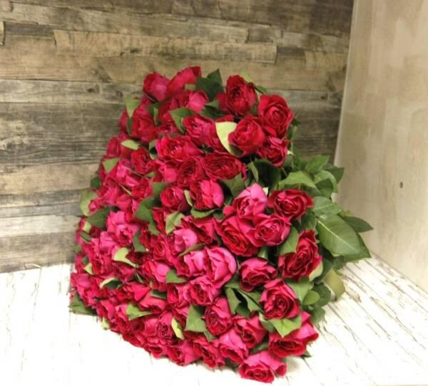 101 английская роза Дарси