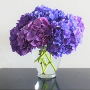 Микс фиолетовой и синей гортензии