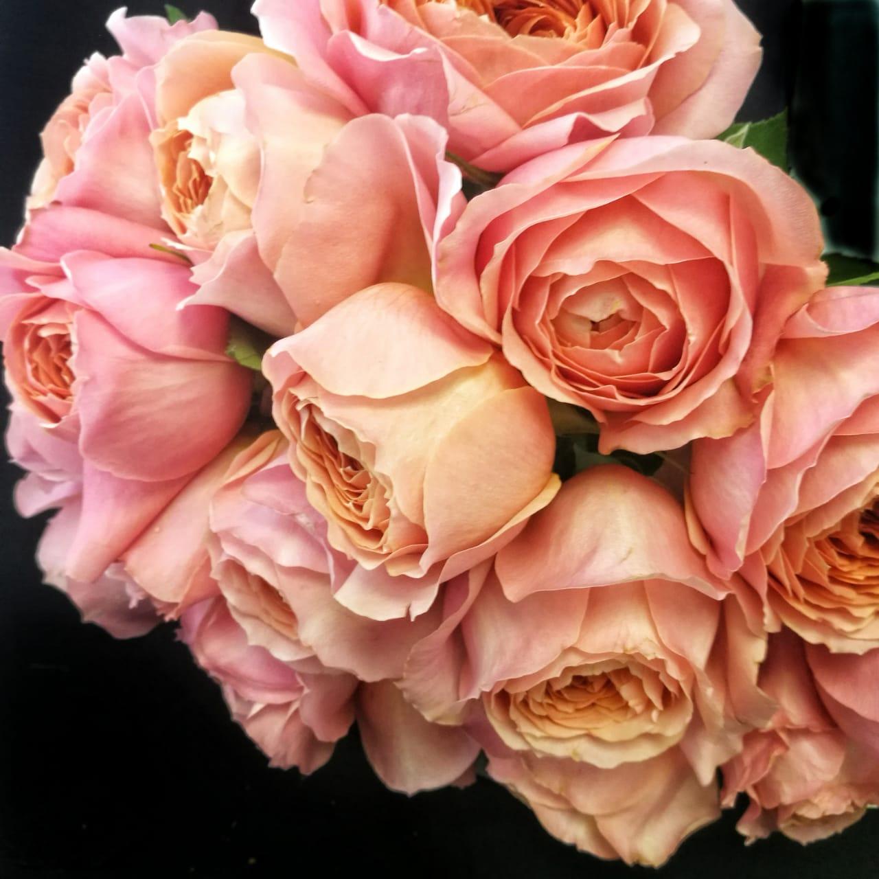 роза романтик антик